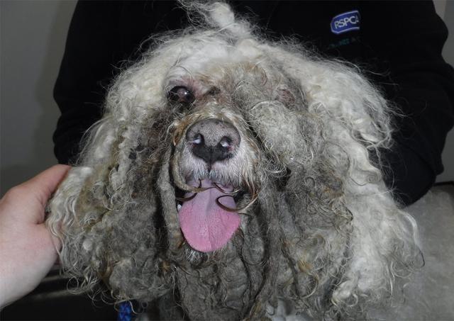 女子因把新锦福5888下载狗养成这样,被判10年内不许养狗
