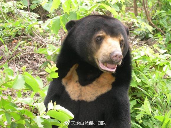 云南——正在消失的野生动物王国(二)