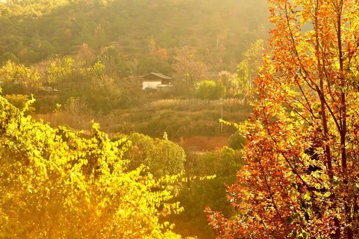 云南丽江秋天太美了,一不小心惊艳了全中国!