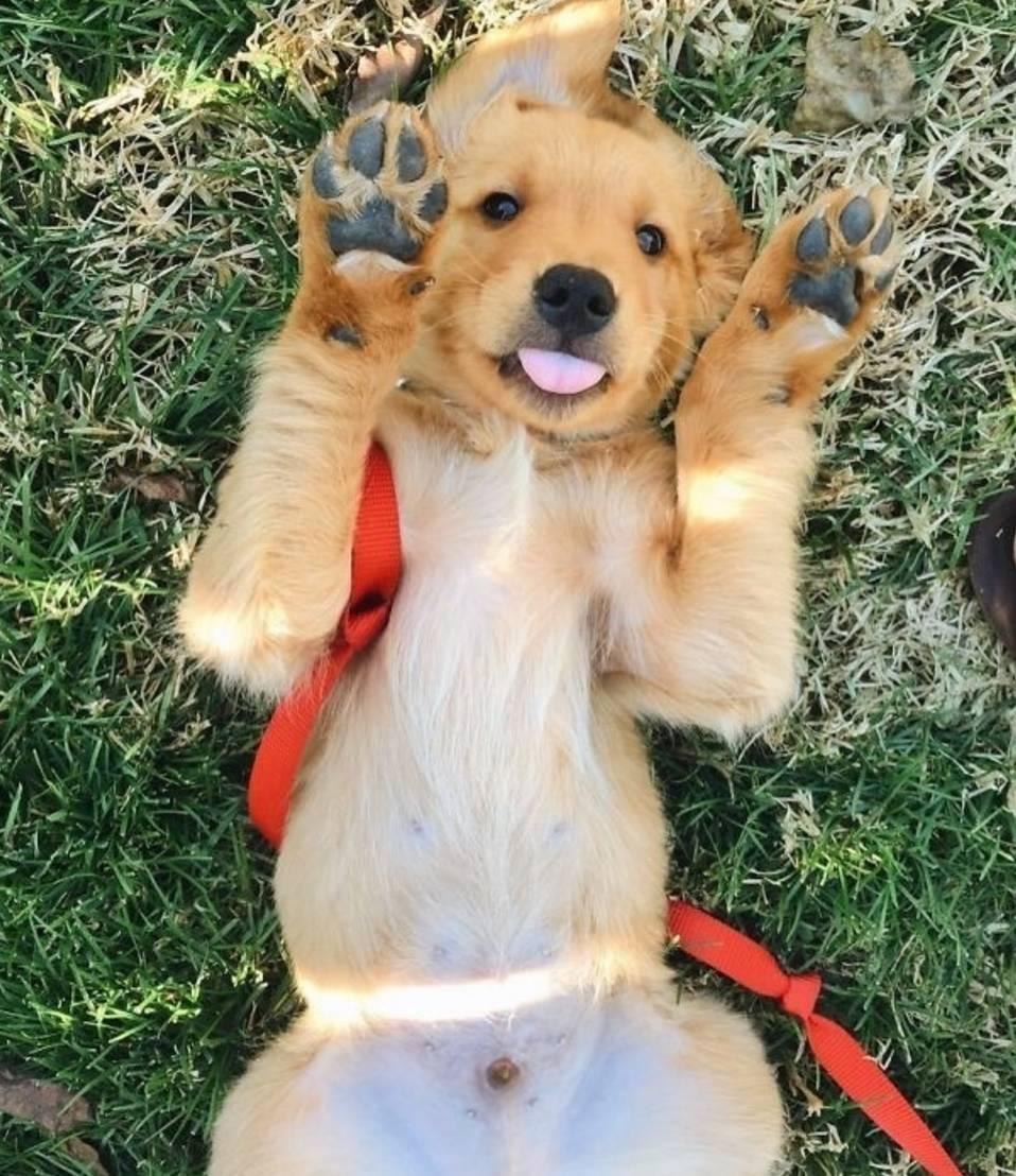 它还会跟小动物们成为最要好的朋友 总是谦让的金毛狗不愧是大暖汪