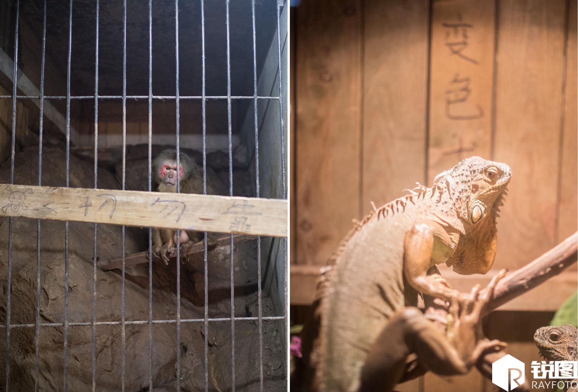 """重庆现迷你型""""动物园"""" 占地不足百平米"""