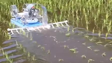日本发明水田除草机效率太高第一次见,终于知道日本米贵的原因!