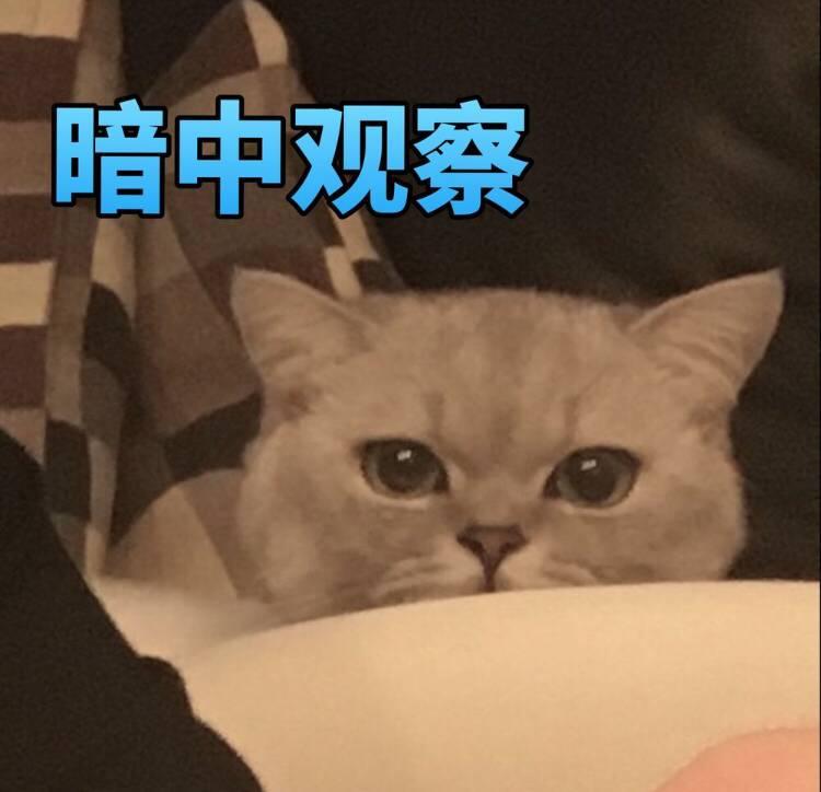 """第一届猫咪""""丑照""""大赛,你准备好存表情包了吗?图片"""