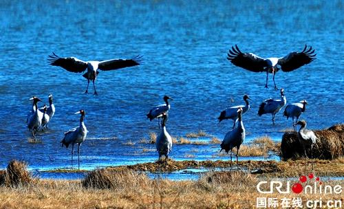 贵州威宁将举办2017中国草海国际观鸟节活动
