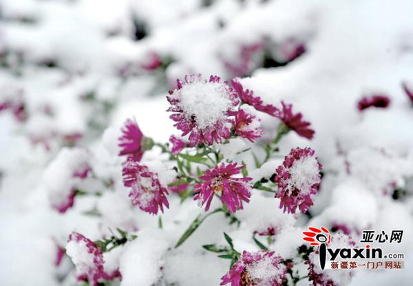 """""""大雪""""无飞雪 仲冬已开始"""