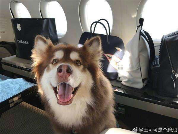 战斗机--中国只有两个80后有私人飞机