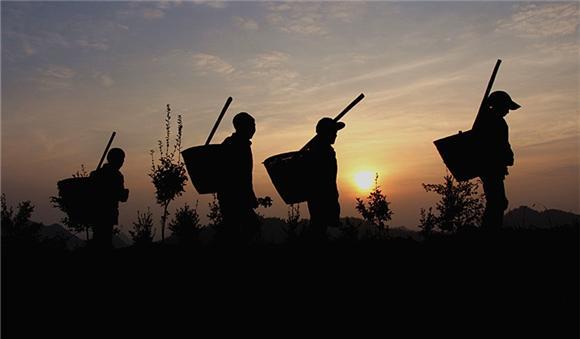 酉阳木叶 最美身影在大山上谱写劳动之歌图片 17791 580x339