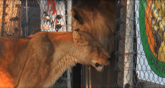动物救援组织把它们带到了南非一个占地3000英亩(约1.