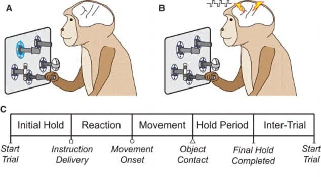 利用电刺激,科学家可以将信息直接注入猴子的大脑