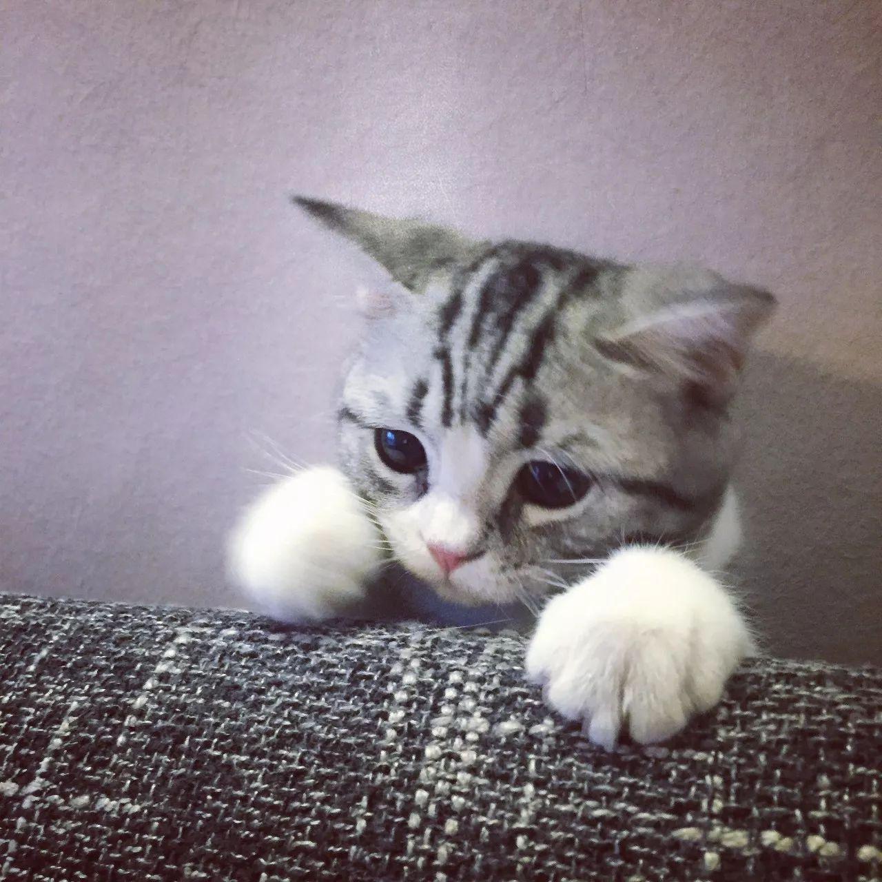 虚拟宠物猫叫价13亿 区块链比特币再引热议 - 点击图片进入下一页