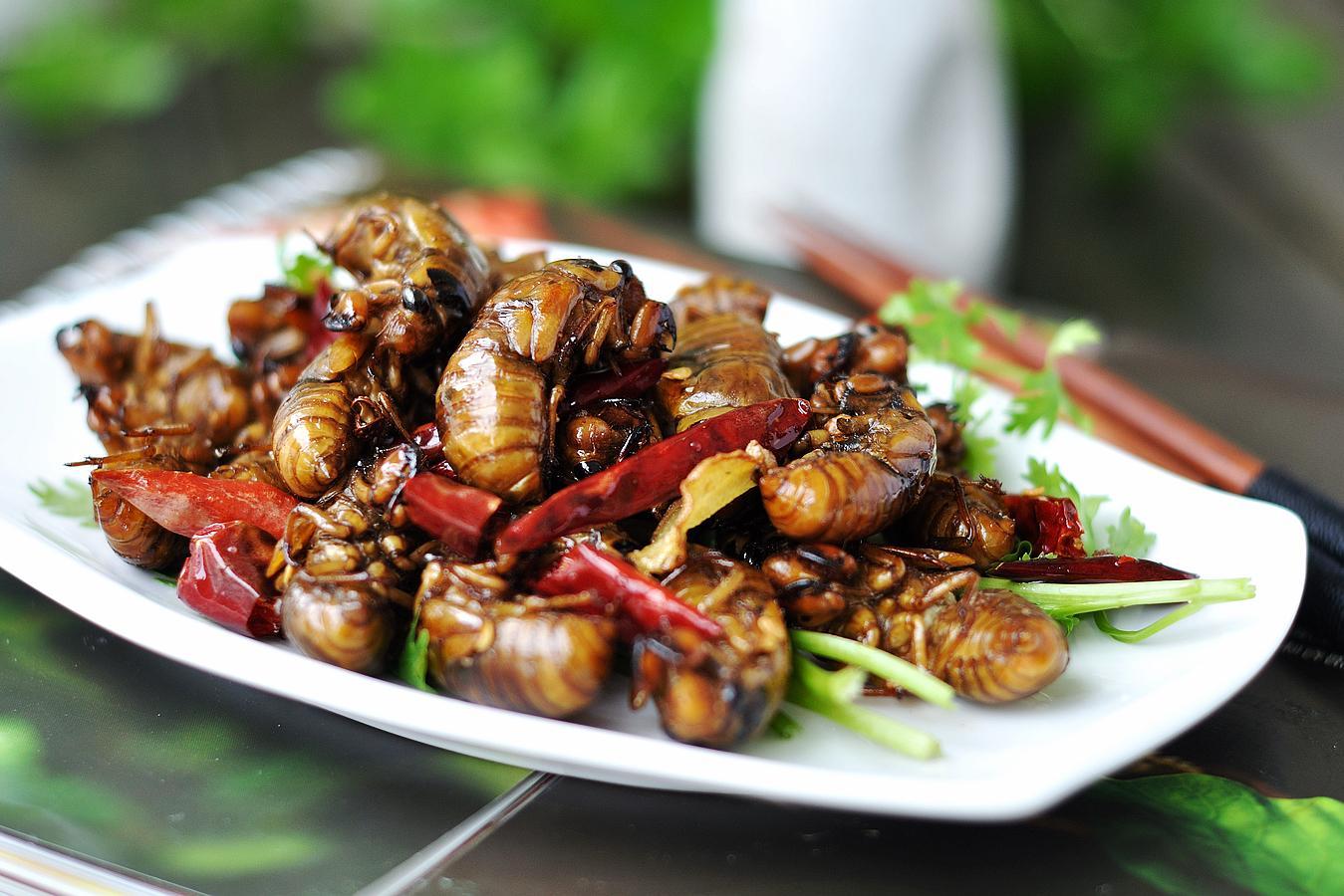 乡间这虫子叫唐僧肉,上等补肾食材,惋惜很多人不敢吃