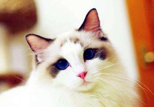 猫眼超模的鸳鸯眼充满魅惑, 动物界为什么会有虹膜