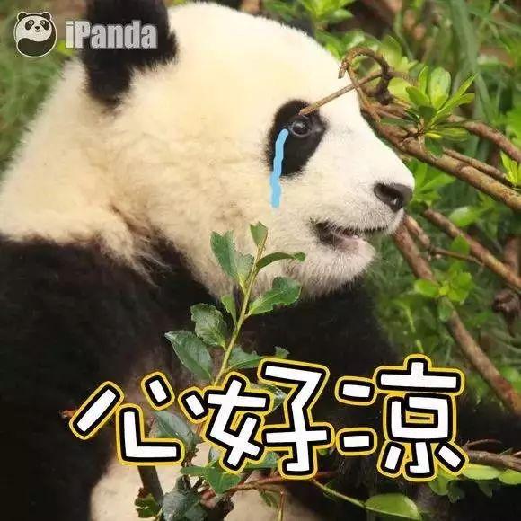 大熊猫的便便做成纸巾啦!43元1盒!你敢不敢买来擦擦嘴