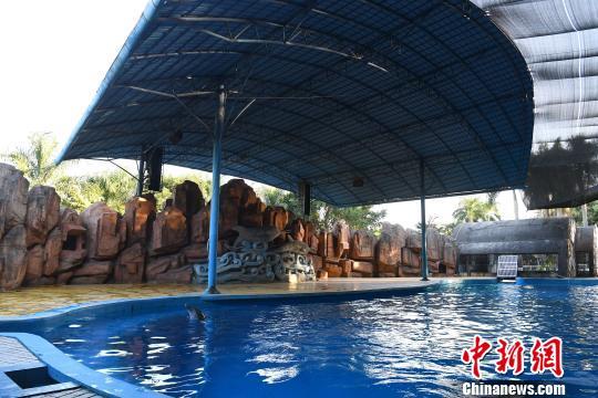 南宁市动物园中华白海豚被指遭虐待 园方回应
