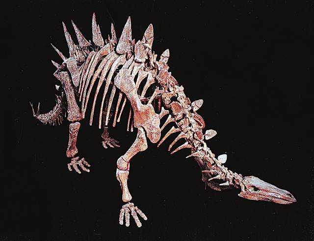 亚洲団地妻_由重庆自然博物馆古生物学专家研究命名,是目前亚洲地区发现的大型