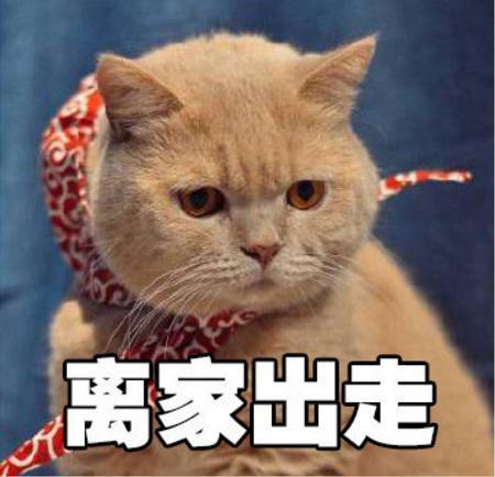 a精灵的橘猫精灵包情表花先表情王图片