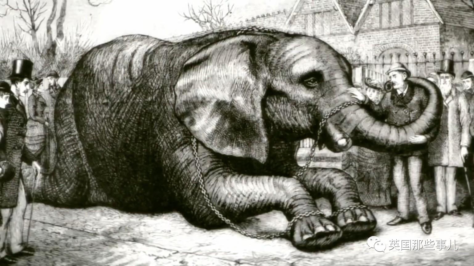 史上首个动物明星 从未伤害人类 也从未被温柔相待