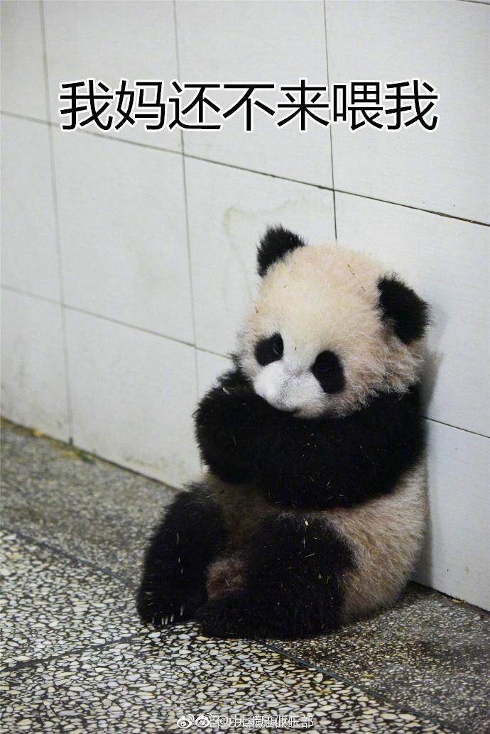 熊猫和猪在一起的图片 猪和熊猫在一起组成的成语 熊猫和猪在一起的图