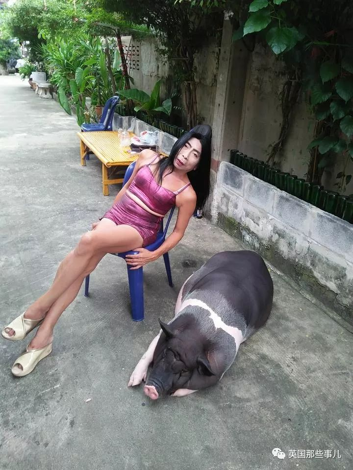 甚至跟老母猪晒个太阳,都要在脸书上发好几张照片-.图片