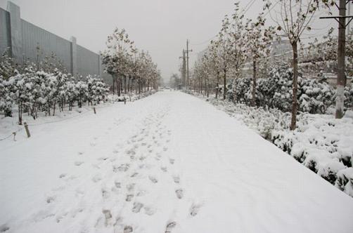 河南暴雪橙色预警 奉上出行信息大全及雪景图片