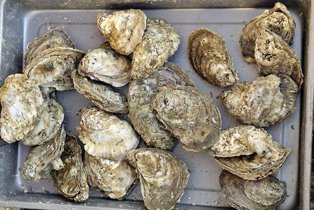 女子因生吃20只生蚝感染病菌,21天后不幸离世
