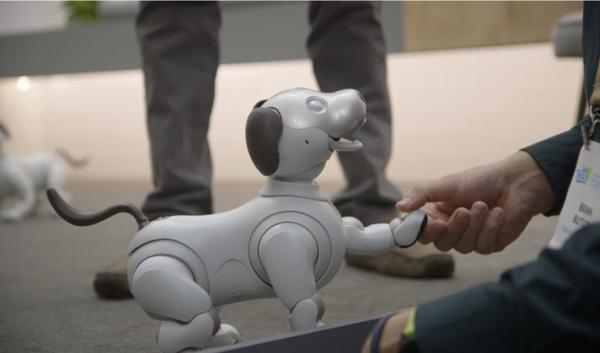 人与Aibo机器狗握手