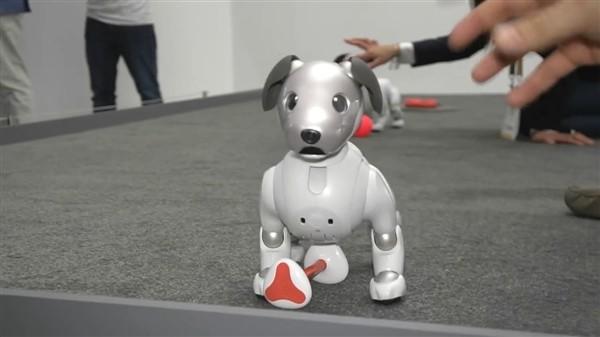 售11500元人民币 索尼新机器狗AIBO亮相