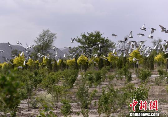 """资料图:在甘肃兰州红古区,昔日尘土飞扬的采煤沉陷区""""变身""""城市公园,截至目前,绿化面积达1080亩。 令望海 摄"""