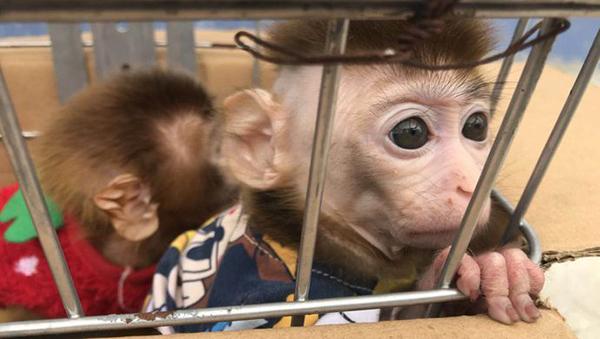 夫妻抓猕猴当宠物被公诉 涉非法猎捕濒危野生动