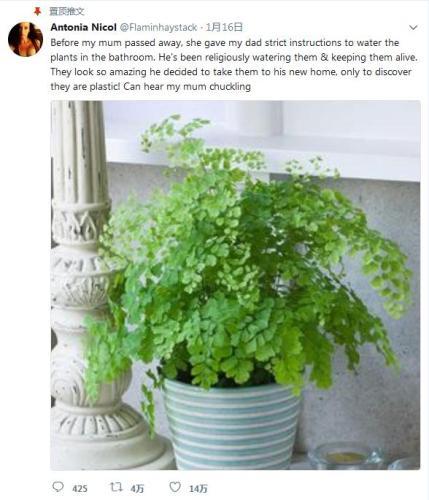 丈夫浇了5年才发现盆栽植物是塑料做的。(图片来源:尼克尔社交网络账户)