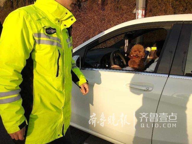 """这个女司机胆太大!抱着""""泰迪""""开车还敢上高"""
