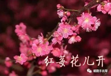 王迟新作手风琴二重奏《红莓花儿开》欣赏