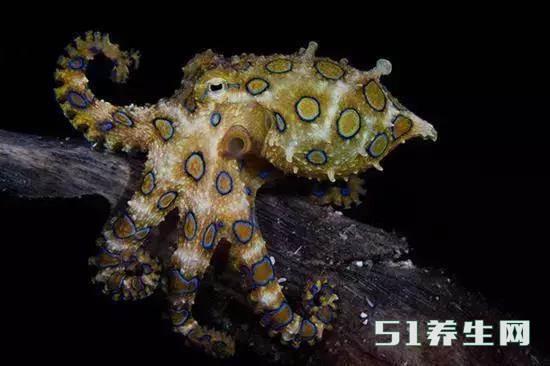 这些独特物种的动物,或许你这辈子都见不到,除了最后一种_图14