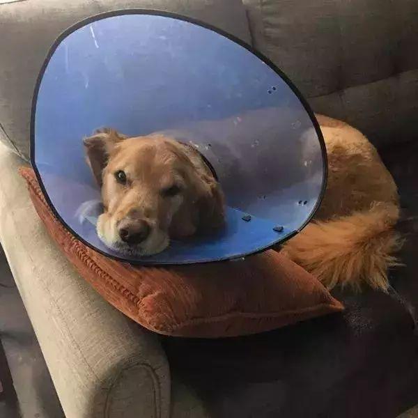 狗狗患上恶性肿瘤小主人日夜守护,最终奇迹发生了!