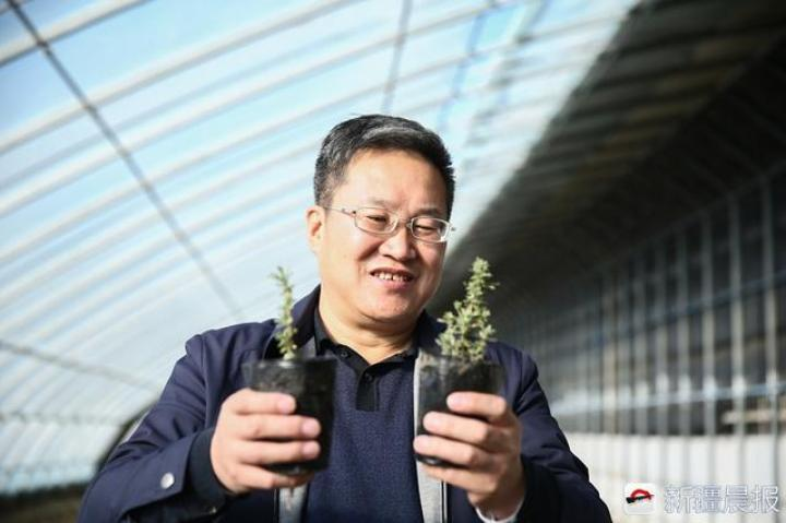 """""""神奇植物"""" 在新疆沙漠试种成功,能防风沙还"""