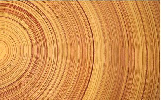 据科学美国人报道,世界上有很多木材都以硬度高而闻名,但是科学家们宣称,利用简单而廉价的新工艺可以将任何一种木材转化成比钢铁更硬的材料,甚至超过高科技的钛合金。除了可用于建筑楼房和车辆,这种材料还可以用来制造防弹装甲板。这样的研究会让材料科学的未来前景变得更加广阔。在不久的将来,我们可能会生活在几乎完全由地球上最丰富、最多样化的建筑材料建造的房子里,从地板到椽、从墙壁到窗户都是木质的。在车库里,可能停放着底盘和保险杠都由压缩木材所制的汽车,而不再是钢材和塑料。 看天下