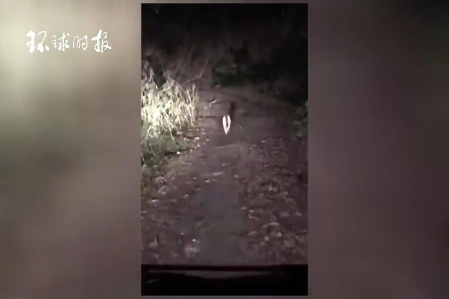 日本司机在深夜森林中迷路 跟随神秘猫咪找到出口