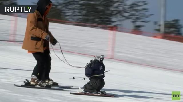 冬奥会机器人滑雪赛看了么?你真不是对手