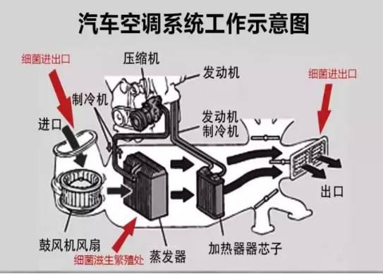 马桶口的内部结构图