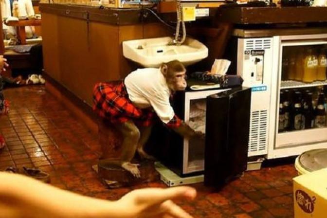 日本超奇特的餐馆,服务员是两只猴子,工资用香蕉抵