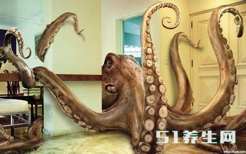 动画章鱼原来长大!巨型小百科鲨鱼图片