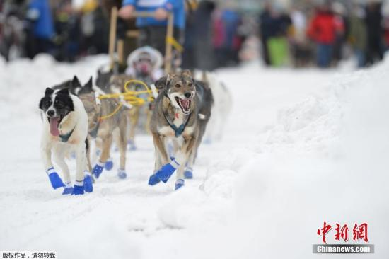 当地时间3月3日,美国阿拉斯加州费尔班克斯,一年一度的艾迪塔罗德狗拉雪橇比赛(Iditarod Trail Sled Dog Race)持续举行。艾迪塔罗德狗拉雪橇比赛是世界上最著名的狗拉雪橇大赛,赛程全长达1688公里,至少需要9天时间才能完成。每年3月份,大赛在阿拉斯加州的安克雷奇市开始,那里的启动赛道长约18公里。终点在阿拉斯加州北部的诺姆(Nome)。