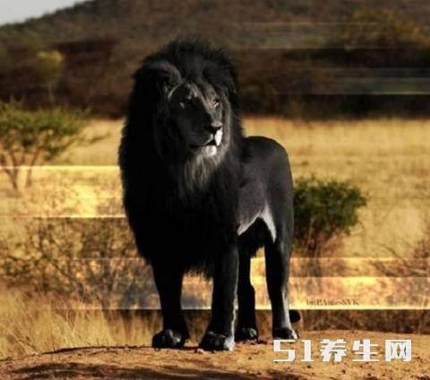 蓝龙黑狮 你可能从未见过的12种稀有动物