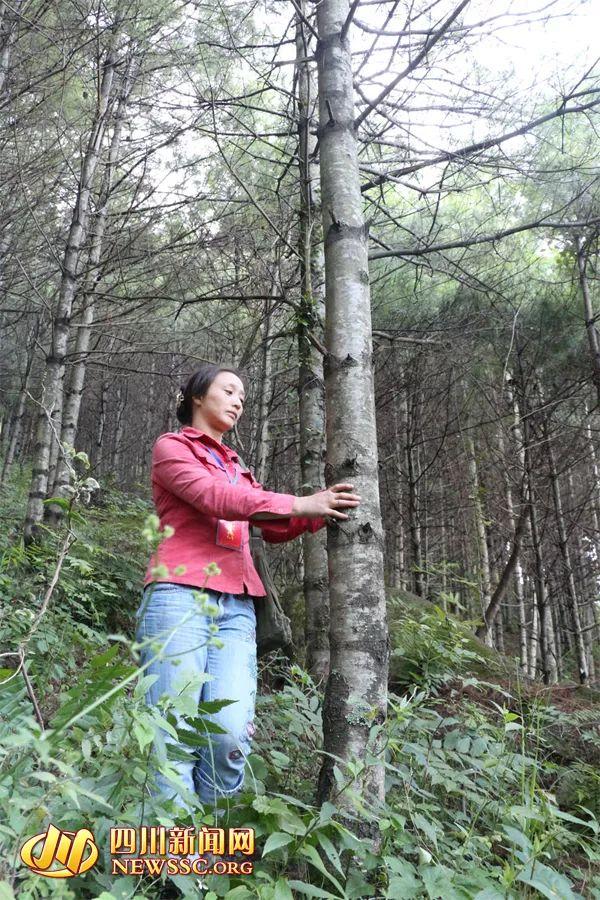 我是一名护林员,对一年工作的总结怎么写