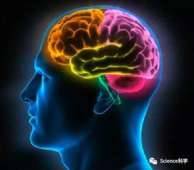 色情片看得越多:成瘾越深 大脑萎缩越快