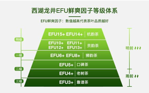 艺福堂EFU指数让好喝看得见? 西湖龙井迎来数字时代
