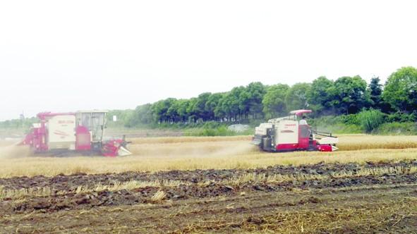 发展绿色农业 打造宜居生态环境 江苏海门走出农作物秸秆综合利用特色路