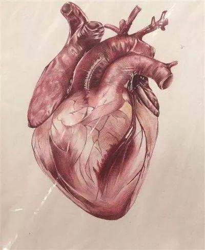 内医大学生手绘 人体解剖图走红网络