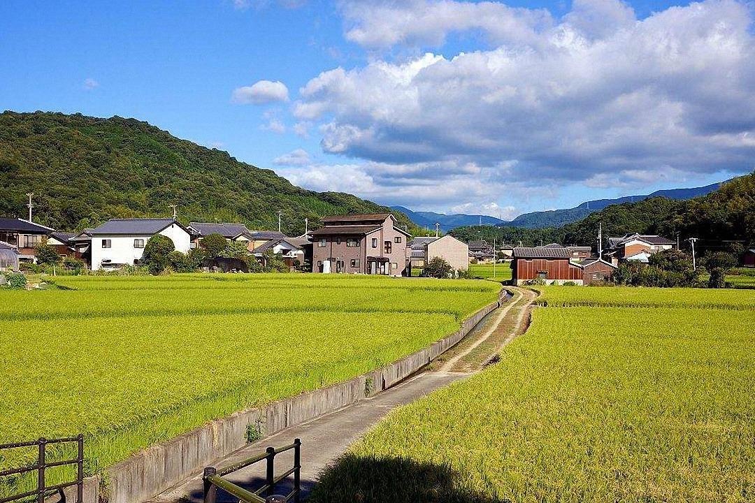 日本人是如何建设他们的新农村,没有对比就没有伤害!