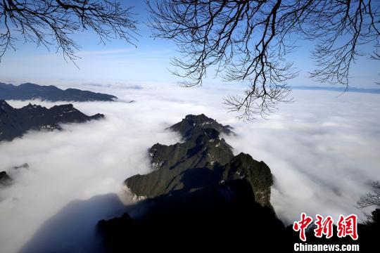 天门山国家森林公园的群峰间出现绝美云海。 刘金文 摄